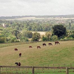 Equestrian1